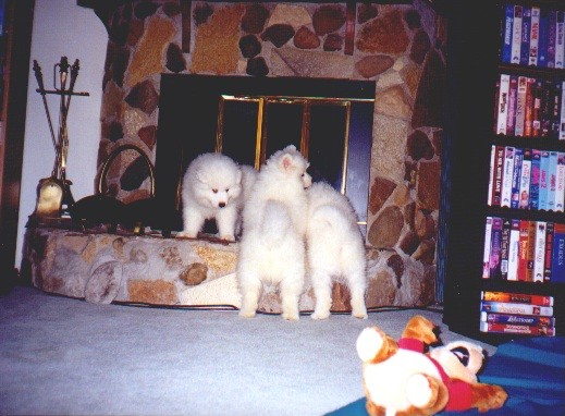 FirePlace3Puppies.jpg (68566 bytes)