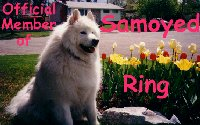 Samoyed Ring
